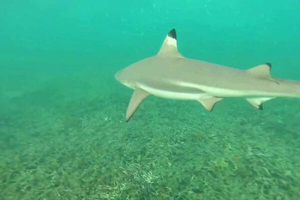 خليج القرش